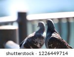 foreground background... | Shutterstock . vector #1226449714