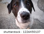 a curious puppy with a wet nose   Shutterstock . vector #1226450137