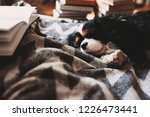 cozy winter home with dog... | Shutterstock . vector #1226473441