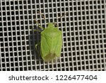 green shield bug or stink bug... | Shutterstock . vector #1226477404