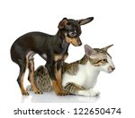 Stock photo dog together with a cat look aside isolated on white background 122650474