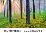 forest trees sunrays background....   Shutterstock . vector #1226563051