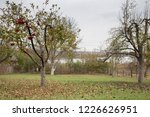 Apple Tree And Pear Tree In A...