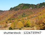 view of the autumn leaves of...   Shutterstock . vector #1226735947