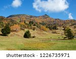 view of the autumn leaves of...   Shutterstock . vector #1226735971