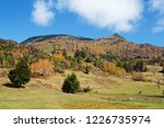 view of the autumn leaves of...   Shutterstock . vector #1226735974