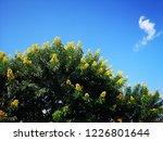 background nature blue sky   Shutterstock . vector #1226801644