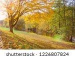 bright yellow autumn foliage on ...   Shutterstock . vector #1226807824