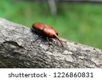 large rusty red colour palm... | Shutterstock . vector #1226860831