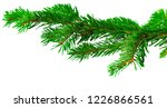 fir branch isolated on white... | Shutterstock . vector #1226866561