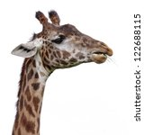 the head of a giraffe isolated... | Shutterstock . vector #122688115