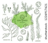 collection of edible seaweed ... | Shutterstock .eps vector #1226917621