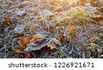 frost on grass and leaves. late ... | Shutterstock . vector #1226921671