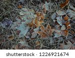 frost on grass and leaves. late ... | Shutterstock . vector #1226921674