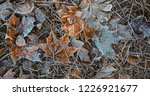 frost on grass and leaves. late ... | Shutterstock . vector #1226921677