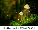 Stock photo glowing mushroom lamps with fireflies in magical forest 1226977561