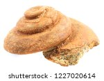 ammonite fossil isolated on the ... | Shutterstock . vector #1227020614