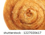 ammonite fossil isolated on the ... | Shutterstock . vector #1227020617