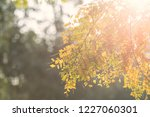 green foliage leaf against... | Shutterstock . vector #1227060301