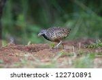 bird on the ground | Shutterstock . vector #122710891