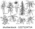cultivated plants collection... | Shutterstock .eps vector #1227124714