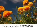 carlsbad flower fields 12 | Shutterstock . vector #122714584