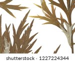 green leaves background on... | Shutterstock . vector #1227224344