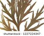 green leaves background on... | Shutterstock . vector #1227224347