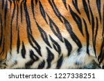 tiger pattern background   real ... | Shutterstock . vector #1227338251