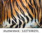 tiger pattern   beautiful real...   Shutterstock . vector #1227338251