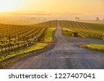 vineyards landscape at sunrise... | Shutterstock . vector #1227407041