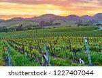 vineyards landscape at sunset... | Shutterstock . vector #1227407044