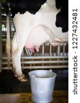 dairy cow in milking process in ... | Shutterstock . vector #1227432481