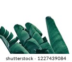 tropical banana leaf isolated... | Shutterstock . vector #1227439084