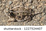 close up of the interesting... | Shutterstock . vector #1227524407