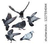 six doves isolated on white... | Shutterstock . vector #1227554044