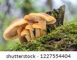 Shot Of Group Edible Mushrooms...