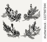 botanical vintage evergreen... | Shutterstock .eps vector #1227587344
