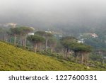 cape town trees   Shutterstock . vector #1227600331