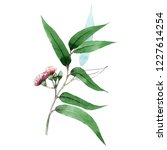green eukalyptus branch. floral ... | Shutterstock . vector #1227614254