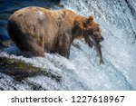 brown bear catching a salmon in ... | Shutterstock . vector #1227618967