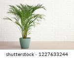decorative areca palm near... | Shutterstock . vector #1227633244