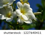 colorful flowers.group of...   Shutterstock . vector #1227640411