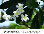 colorful flowers.group of...   Shutterstock . vector #1227640414