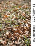 yellow autumn leaves on the... | Shutterstock . vector #1227659461