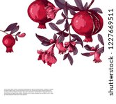 pomegranate background with... | Shutterstock .eps vector #1227669511