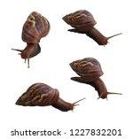 set of snail isolated on white...   Shutterstock . vector #1227832201