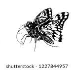 loxostege sticticalis  linnaeus ... | Shutterstock .eps vector #1227844957