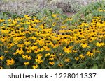 Beautiful Yellow Flowers And...