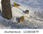 Yellowhammer Sitting On The...